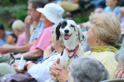 IMG_1315 Abbey, a pocket sized English Setter, with owner sarah bruce of hartland,,in the front row