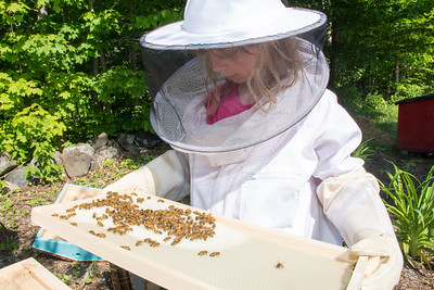 Sydney and Her Bees