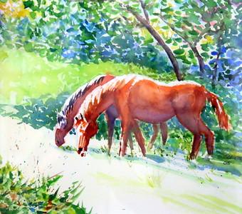 IMG_2143 Horses, Horses, Horses,;;;by Sheryl  Trainor