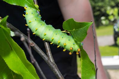 The World of Caterpillars