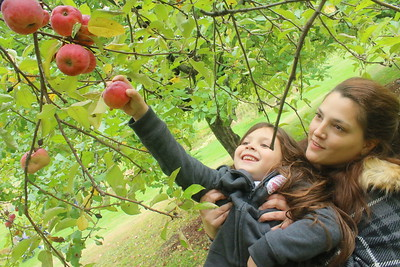 IMG_7179 gianna calev, 6, and her  sister alison,,pick apples,,staying in killington on vacation