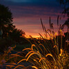 49er's Sunset