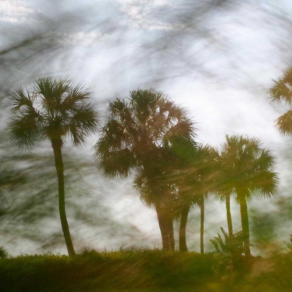Day 73 - palm trees through beach grasses
