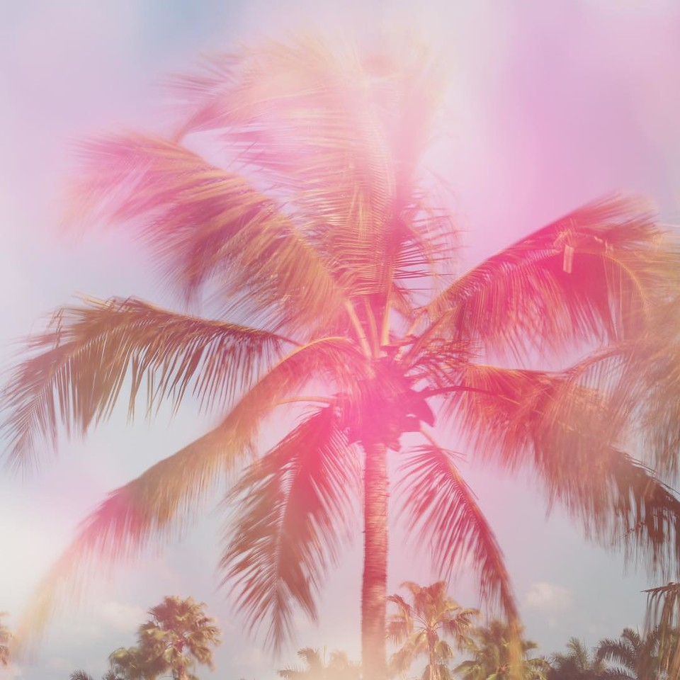 Day 74 - double exposure, long exposure, flowers/palm tree