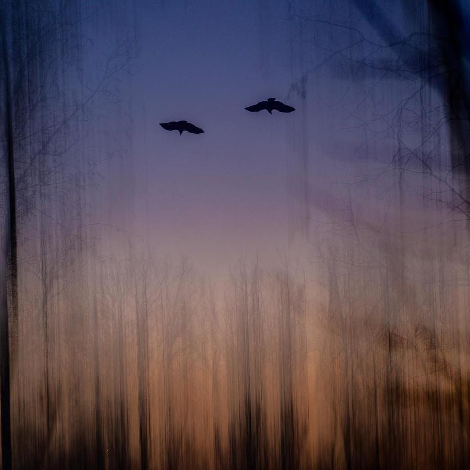 Day 366 - multiple exposure: sunrise/hawks at dusk