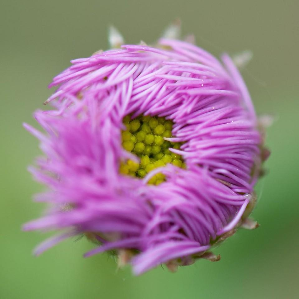 Day 130 - emo flower
