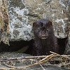 Mink - this photo reminds me of those haunting photos from derelict buildings