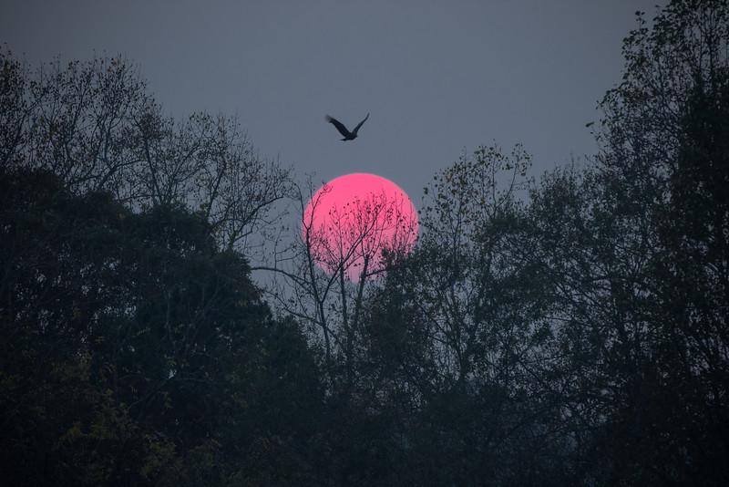 Sun setting over Lake Hollifield