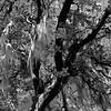 Lichens above the Applegate Reservoir