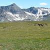 Group of Elk at Rocky Mountain National Park