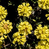 2016, JODA, NPS, OR, flora, flower, park, travel
