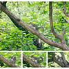 20160607 Squirrel