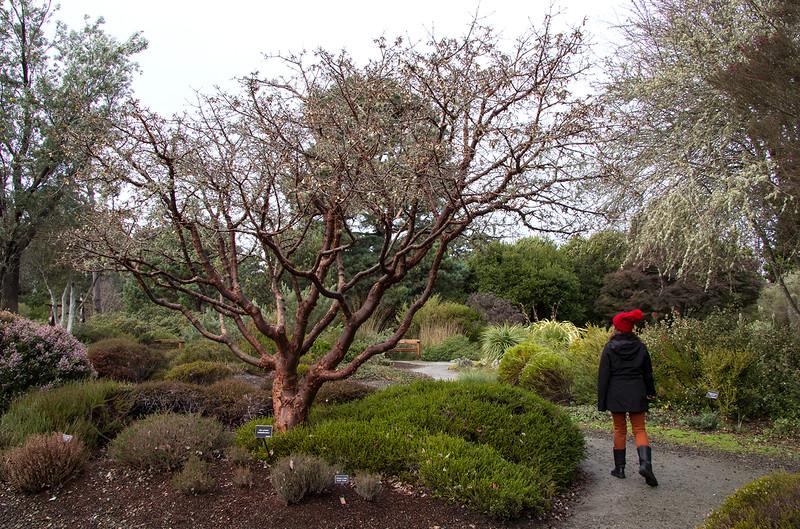 mendo botanical garden