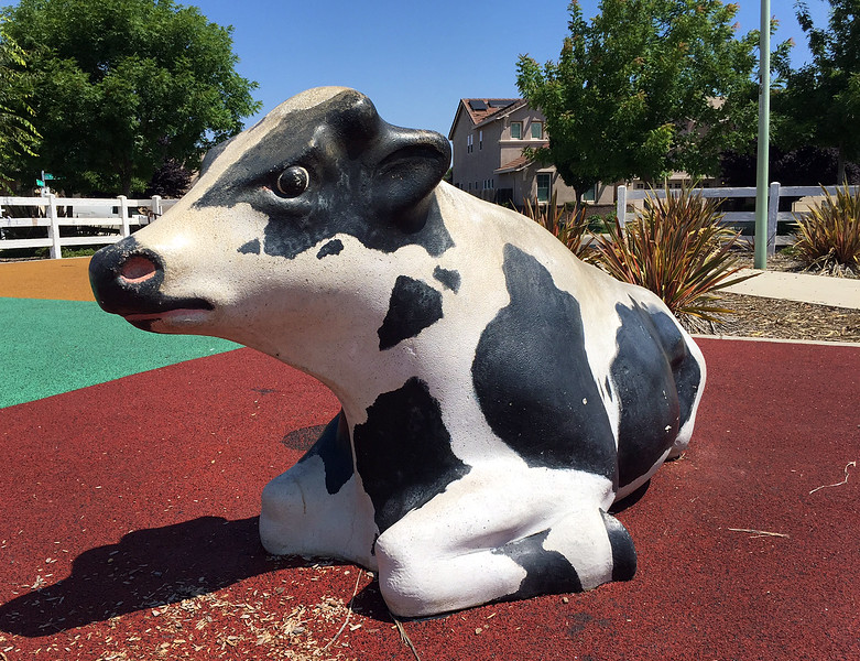 the angry cow at machado park