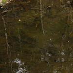 Pulpit Rock - Bedford NH 18