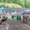Elk2016_6191