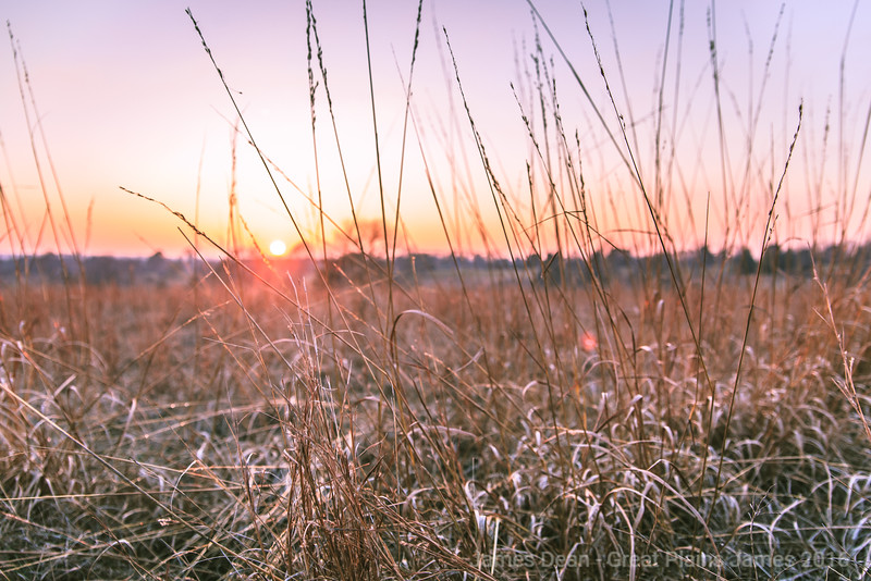 Pioneers Grass