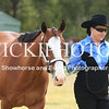 CCHS Summer Breed Show_16