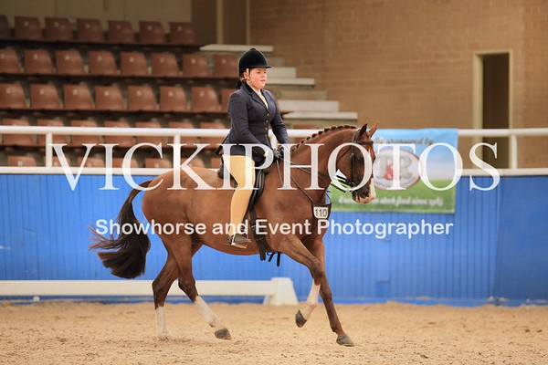 Child's Large Show Hunter Galloway over 14.2hh up to incl 15hh