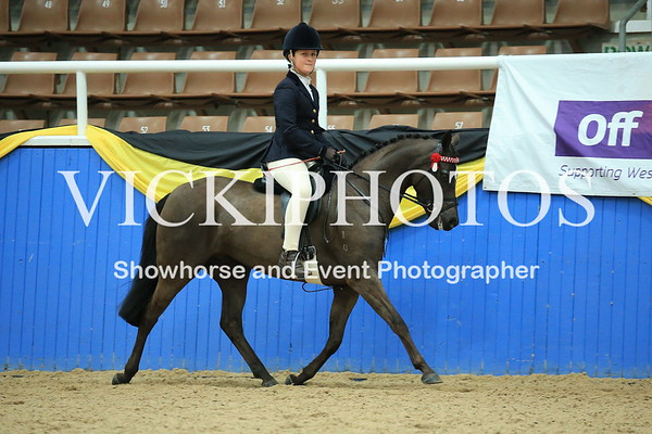 Child's Large Show Pony