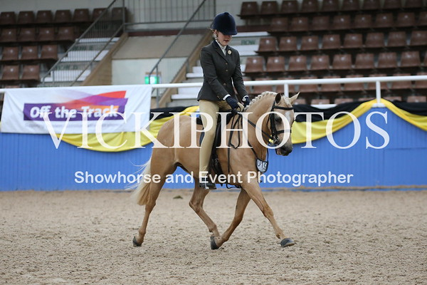 Child's Medium Show Hunter Pony over 12hh up to inc. 13hh