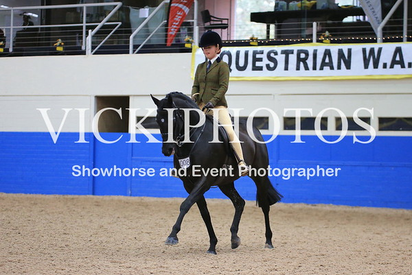 Child's Small Show Hunter Galloway over 14hh up to incl 14.2hh