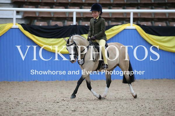 Child's Small Show Hunter Pony 12hh & Under