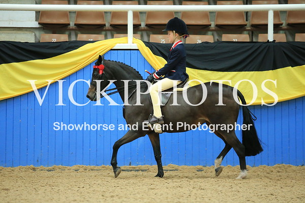 Childs Small Show Pony
