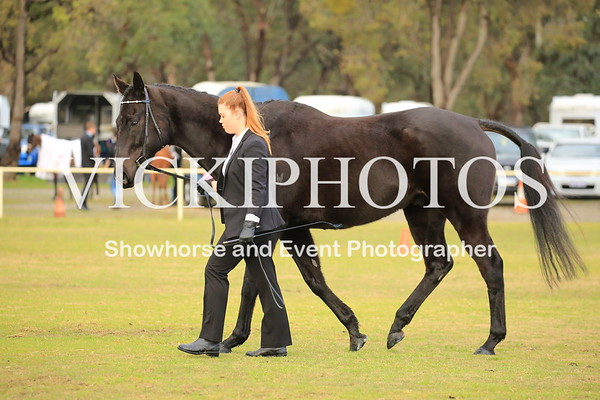 Gosnells Winter Breed Show