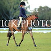 Granthams Show Horse Champs_10