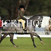 Granthams Show Horse Champs_19