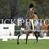 Granthams Show Horse Champs_12