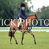 Granthams Show Horse Champs_09