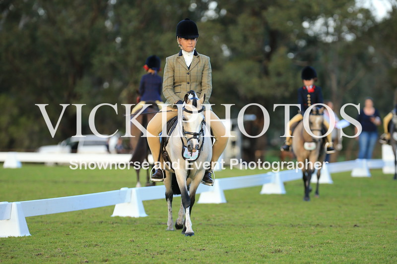Granthams Show Horse Champs_01