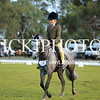 Granthams Show Horse Champs_16