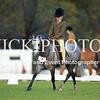 Granthams Show Horse Champs_13