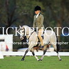 Granthams Show Horse Champs_11