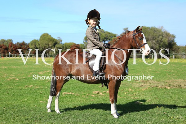 Open Hack & Dressage Day - 16.10.2016