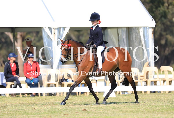 Class 34 - Childs Large Show Pony