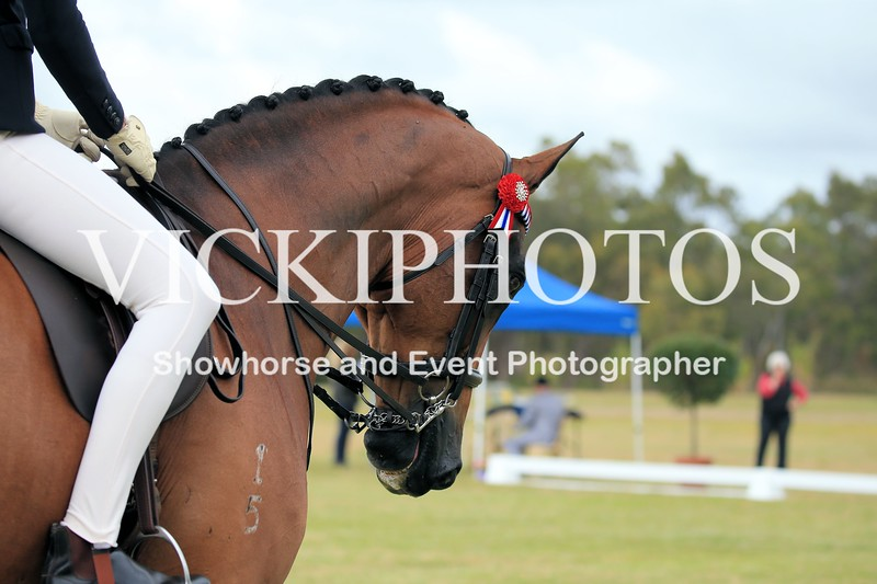 2016 Horse of the Year_01