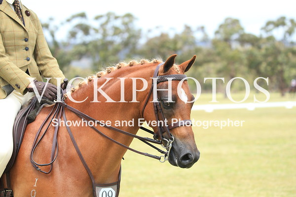 Class 11 - Large Show Hunter Pony