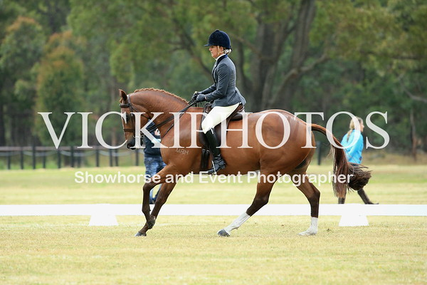 Class 3 - Large Show Hunter Hack over 16hh