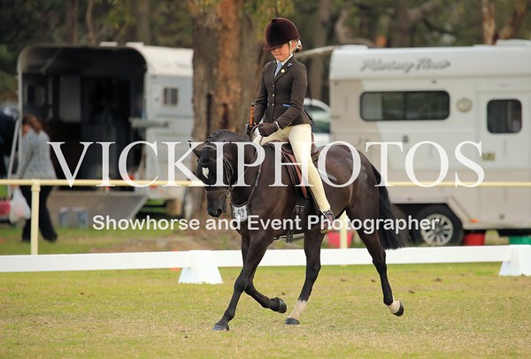 Foundation Large Show Hunter Pony