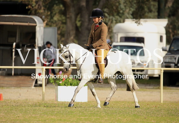 Foundation Small Show Hunter Pony