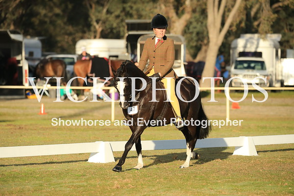 Large Show Hunter Pony