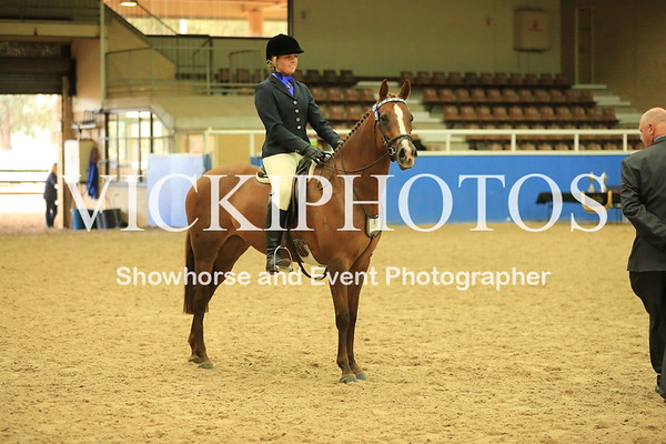 Saddle Horse of the Year  -  Classes 11 - 15