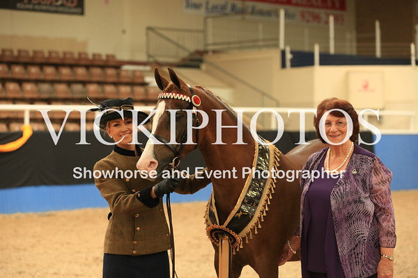 Partbred Arabian - Classes 60 to 63
