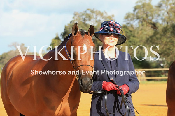 Best Presented over 14.2hh