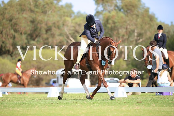 Large Show Hunter Galloway
