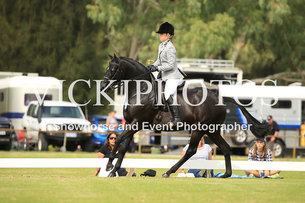 Small Show Hunter Galloway